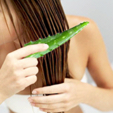 aloe-vera-for-hair